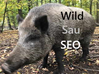 wildsau SEO definition ranking